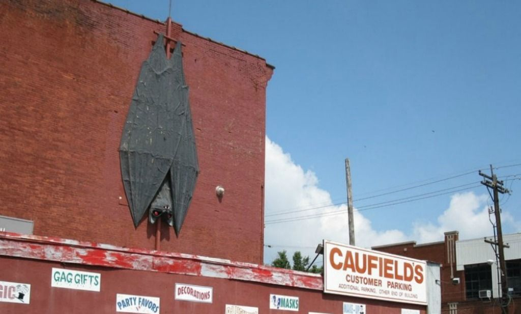 The World's Largest Nocturnal Bat can be seen at Caufield's Costume Store down the road from the world famous Louisville Slugger Bat.