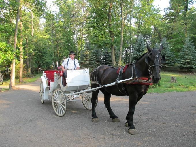 horse drawn carraige ride