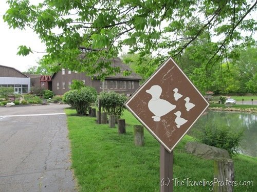 Duck Crossing at Ye Olde Mill
