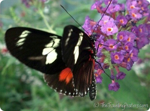 the Butterfly House on Put-in-Bay