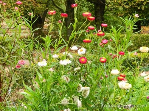 Fall blooming flowers at Kingwood Center