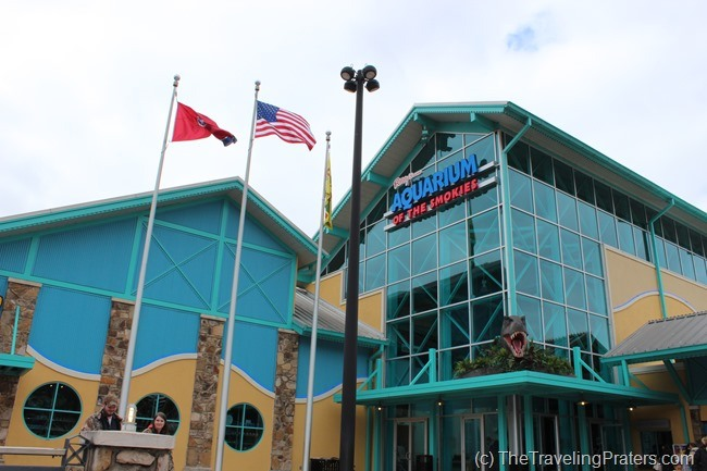 Ripley's Aquarium of the Smokies- Your Guide to Homeschool Friendly Spring Break Ideas in the Smokies via www.thetravelingpraters.com