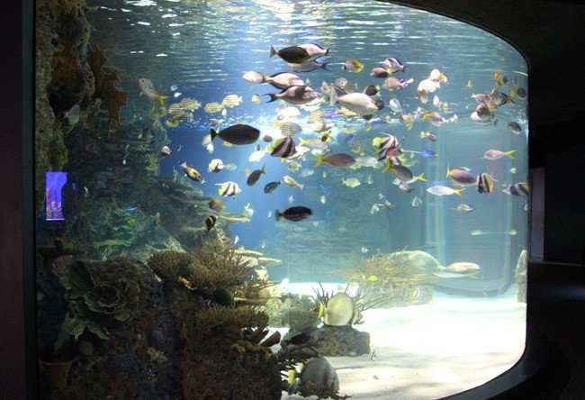 Inside Ripley's Aquarium of the Smokies in Gatlinburg