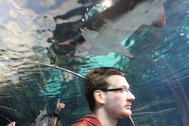 Shark Tunnel at Ripley's Aquarium of the Smokies