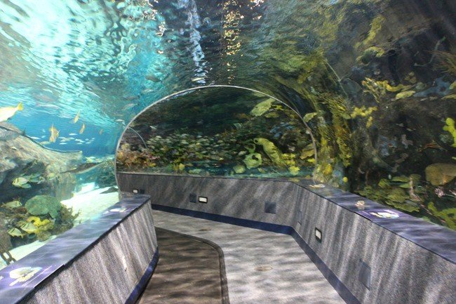 Shark Tunnel at Ripley's Aquarium of the Smokies