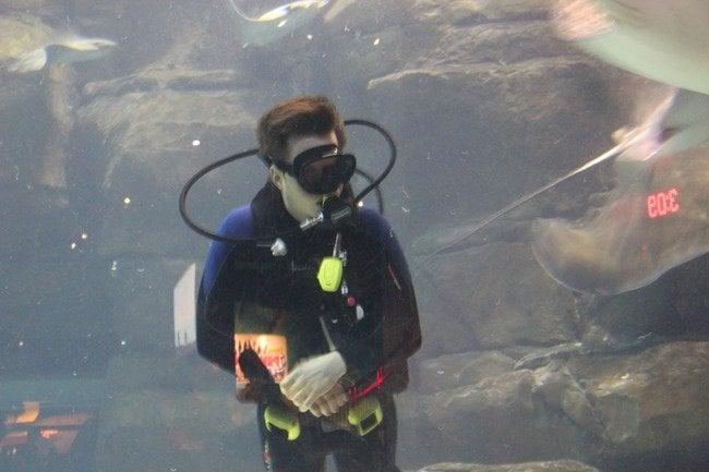 Divers at Ripley's Aquarium of the Smokies