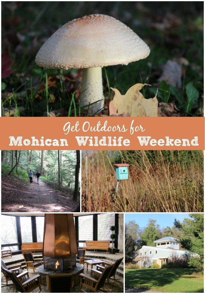 Get Outdoors for Mohican Wildlife Festival April 22nd-24th in North Central Ohio.