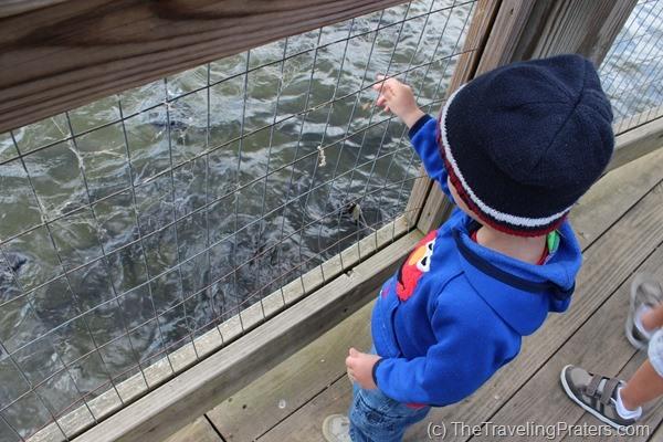 Feeding the catfish