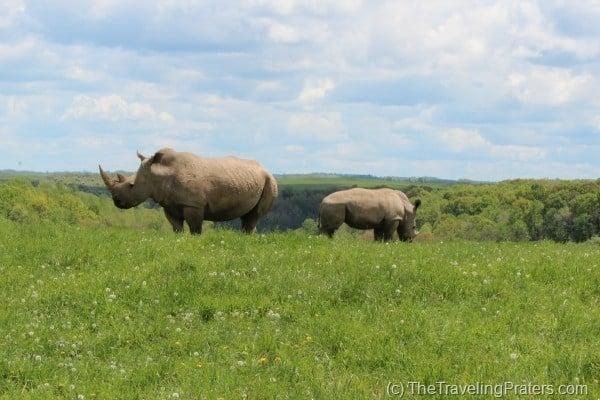 The Wilds Rhino