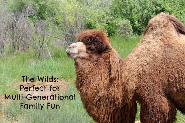 The Wilds: Perfect for Multi-Generational Family Fun