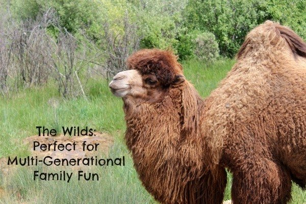 The Wilds multi-generational family fun