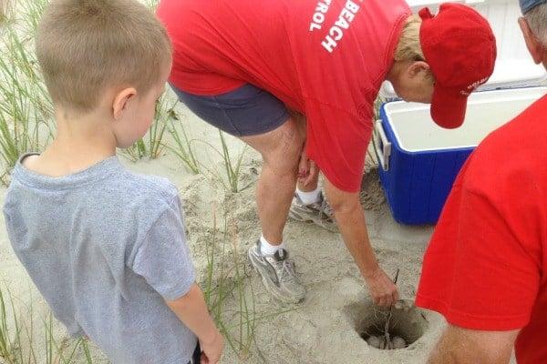 Turtle Nest on Holden Beach