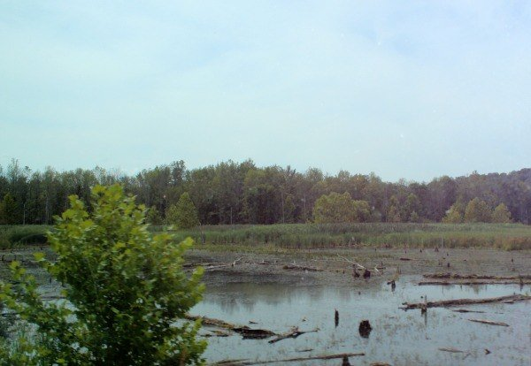 view of the wetlands from on board the Cuyahoga Valley Scenic Railroad