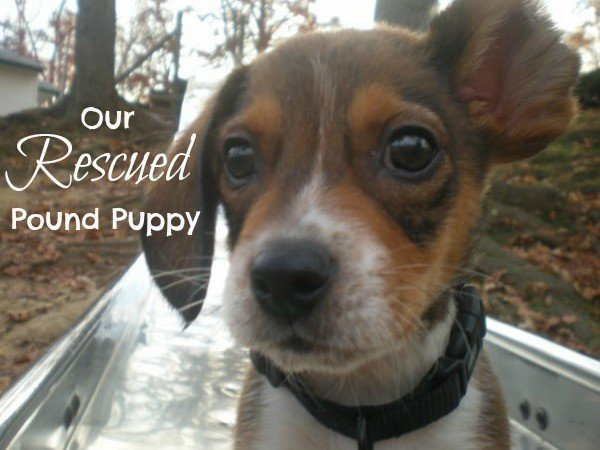 Our Rescued Pound Puppy #shop