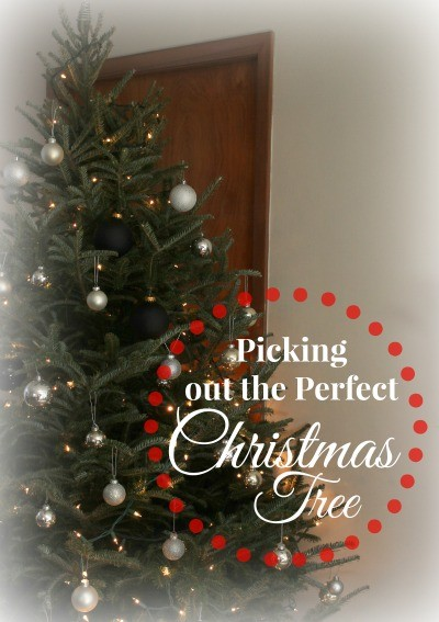 Picking out the Perfect Christmas Tree- Sugargrove Tree Farm in Ashland, Ohio