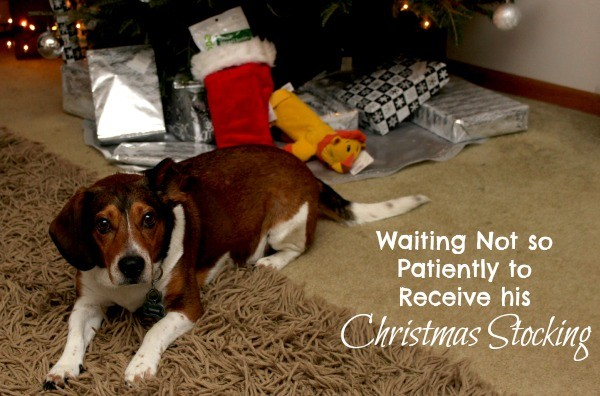 Waiting for his Christmas Stocking #shop