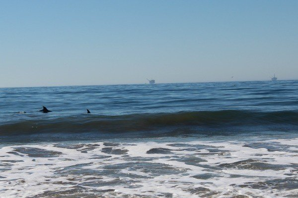 Dolphins at El Capitan State Park