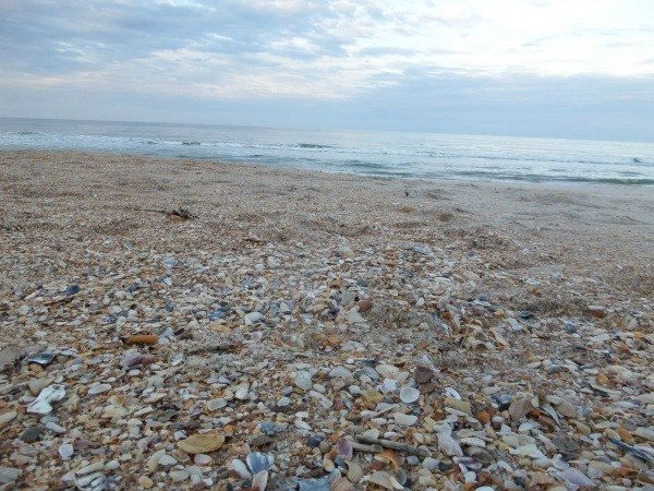Mickler's Beach near Jacksonville, Florida is full of seashells to collect.