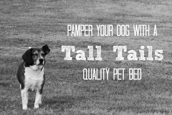 Pamper your dog with a Tall Tails Quality Pet Bed