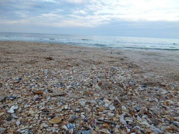 Shells are plentiful at Mickler's Beach