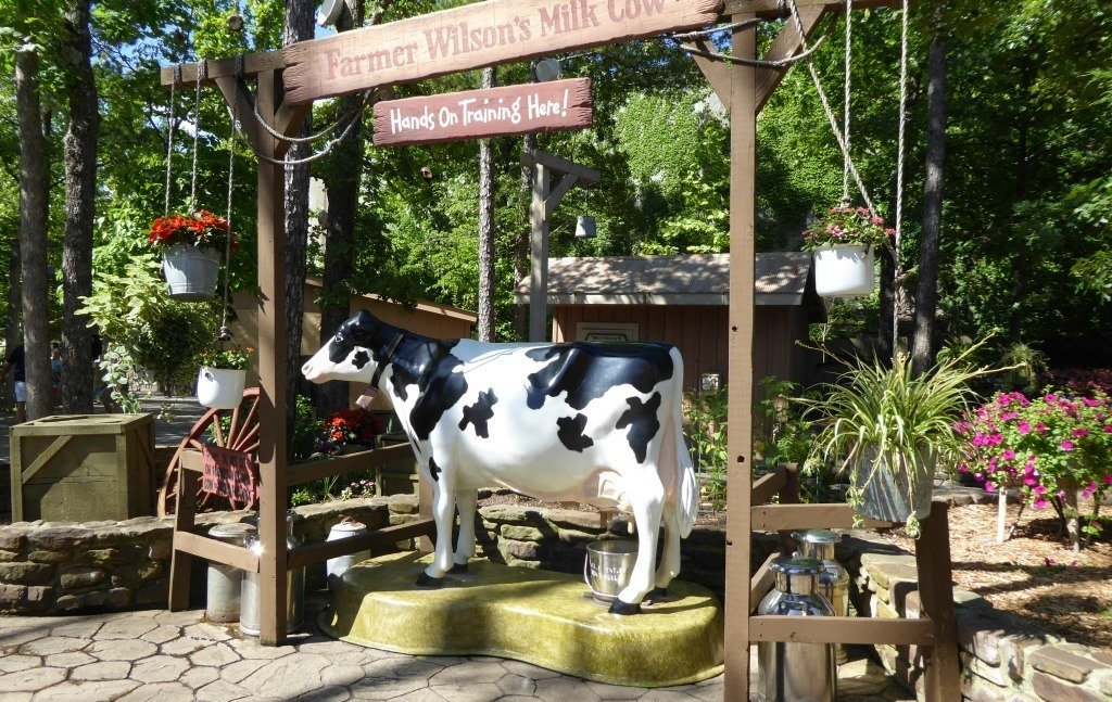 You can milk a cow at Silver Dollar City