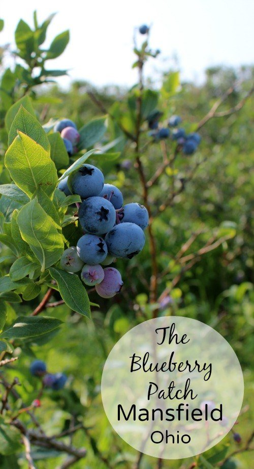 The Blueberry Patch in Mansfield, Ohio