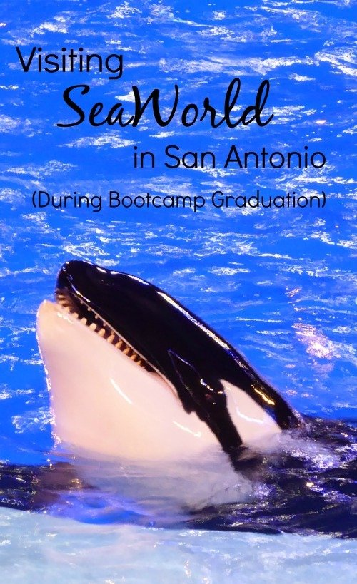 Visiting SeaWorld in San Antonio during bootcamp graduation