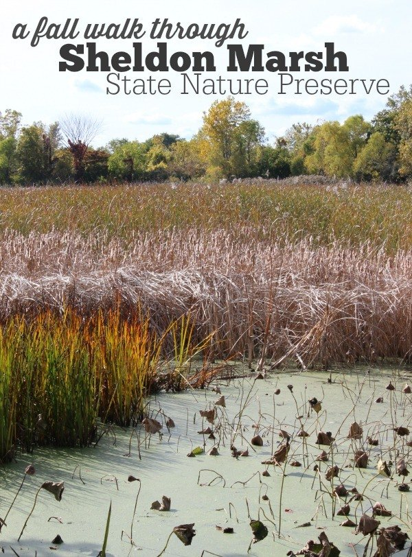 A Fall walk through Sheldon Marsh State Nature Preserve