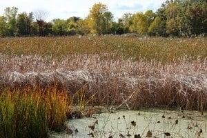 A Fall Walk Through Sheldon Marsh State Nature Preserve