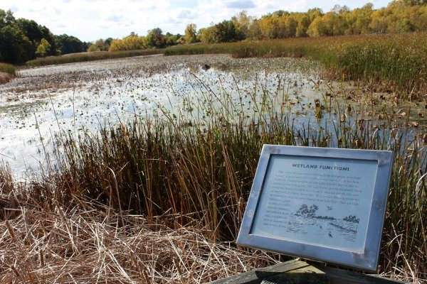 Wetlands at Sheldon Marsh State Nature Preserve