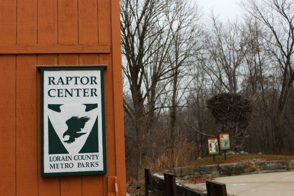 The Raptor Center with the World's Largest Eagle's Nest replica in Lorain County Ohio