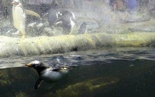 Homeschoolers invited to explore Newport Aquarium during Homeschool Days, March 14 & 15