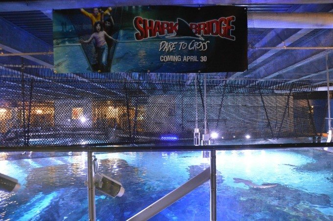 Dare to Cross the Shark Bridge at Newport Aquarium- the only rope suspension bridge above a shark tank in North America.