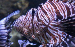 Fall Homeschool Days at Newport Aquarium in Newport, Kentucky