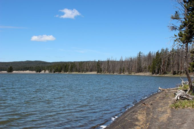 Things to do in Yellowstone- Spot Moose along the shore of Yellowstone Lake.