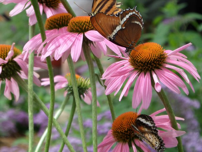 The Butterfly House on Put-in-Bay is a family favorite attraction.