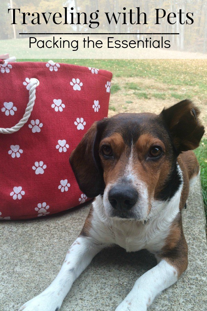 Traveling with Pets packing for comfort and safety