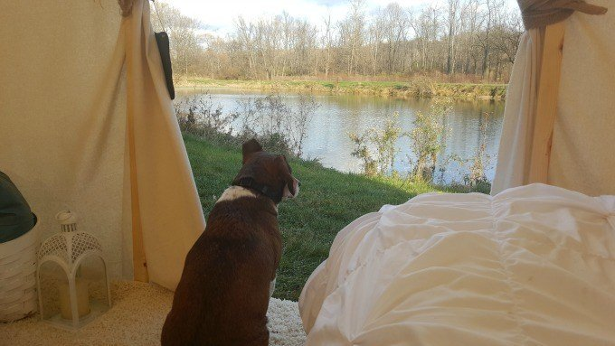Glamping with Vinnie