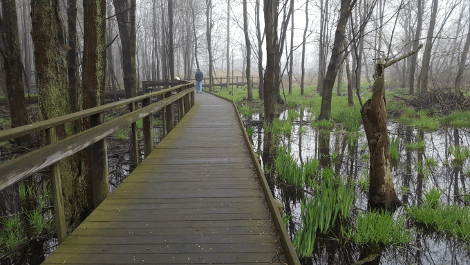 A walk through the swamp at Maumee Bay State Park