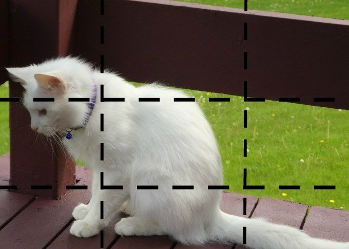 oscar with grids