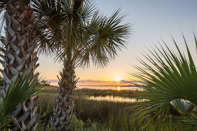 Escape winter in beautiful, natural Gulf County, Florida.