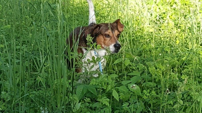 Vincent playing in the weeds