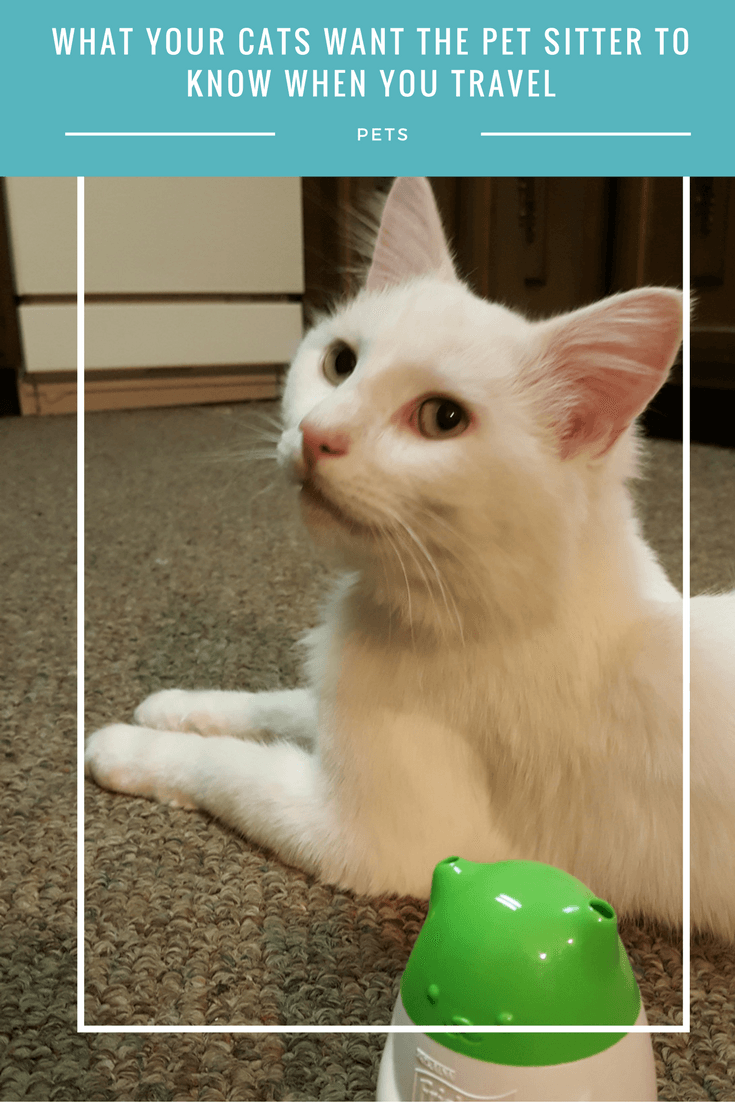 What your cat wants the pet sitter to know when you travel. #MostPlayfulCat (ad)