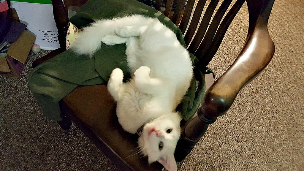 the-cat-taking-my-chair