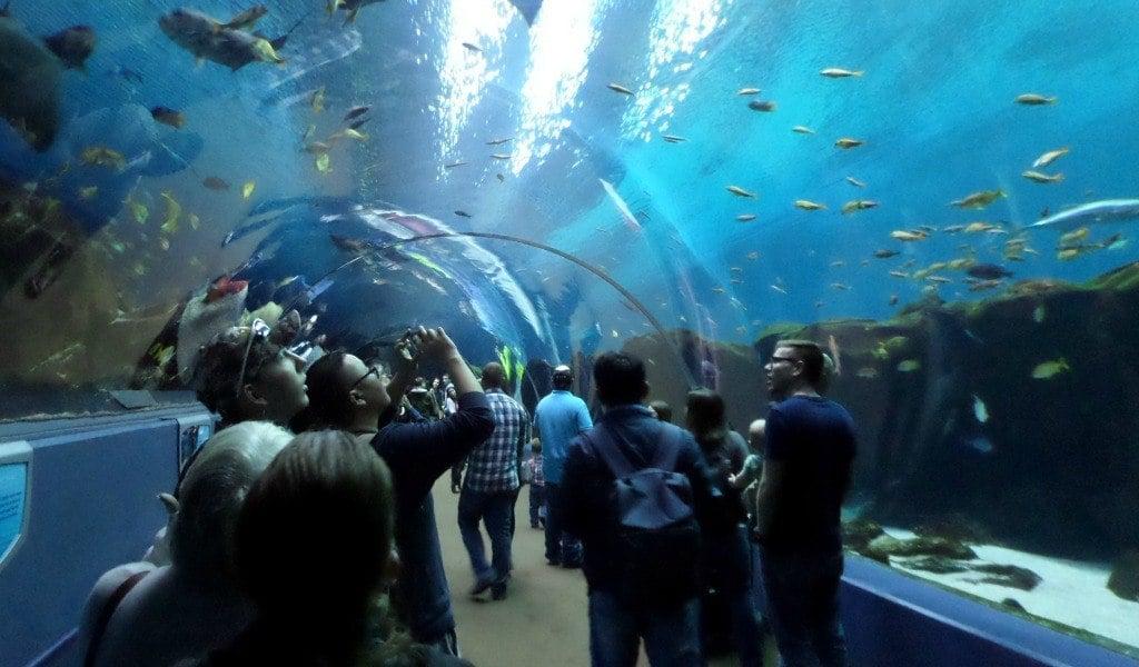 Walking through the shark tunnel at the Georgia Aquarium