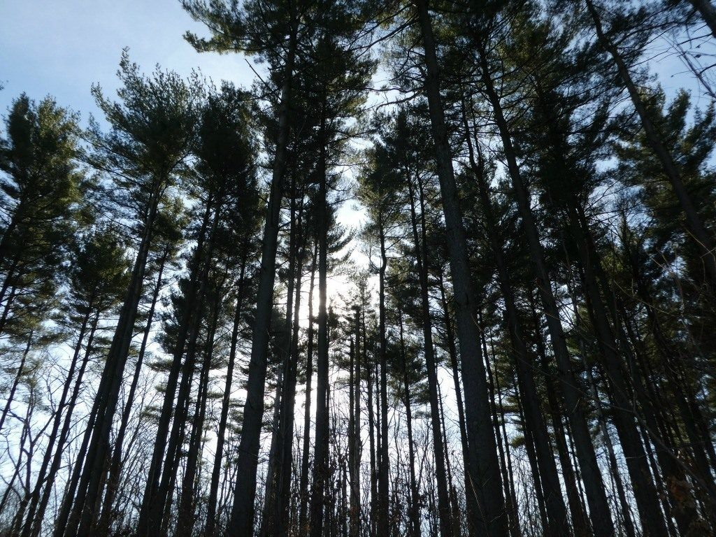 Hike the Discovery Forest Trail in the Mohican-Memorial State Forest