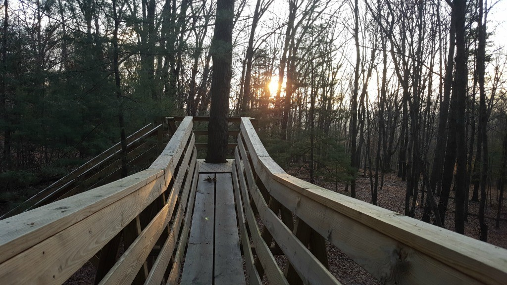 The sunrise at the Old Pine Treehouse