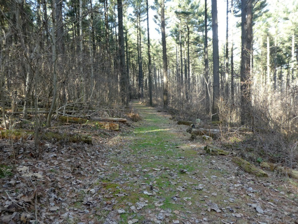 The Discovery Forest Trail at Mohican.