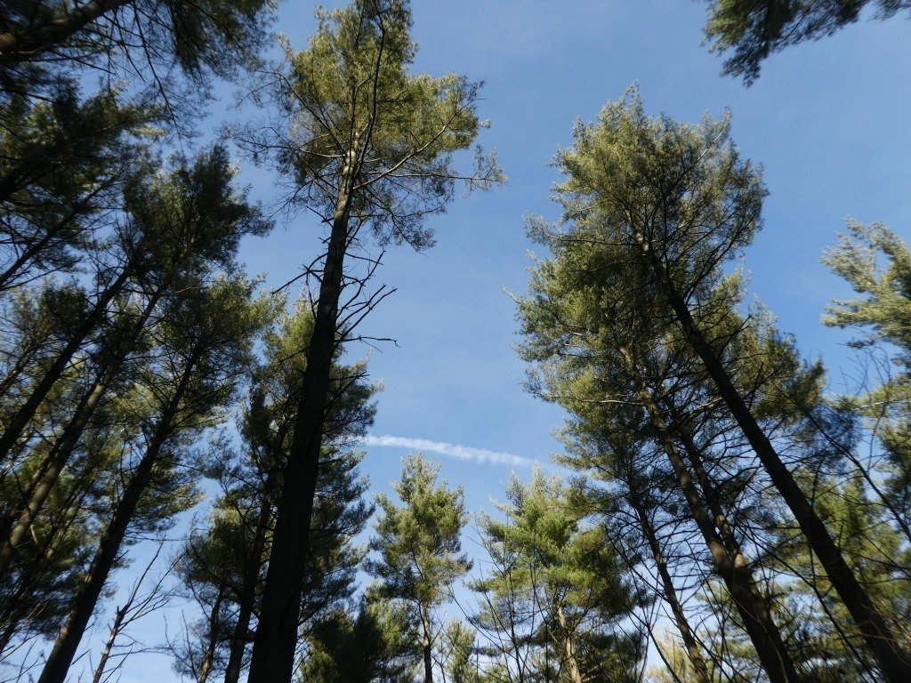 Treetops in the Discovery Forest Trail