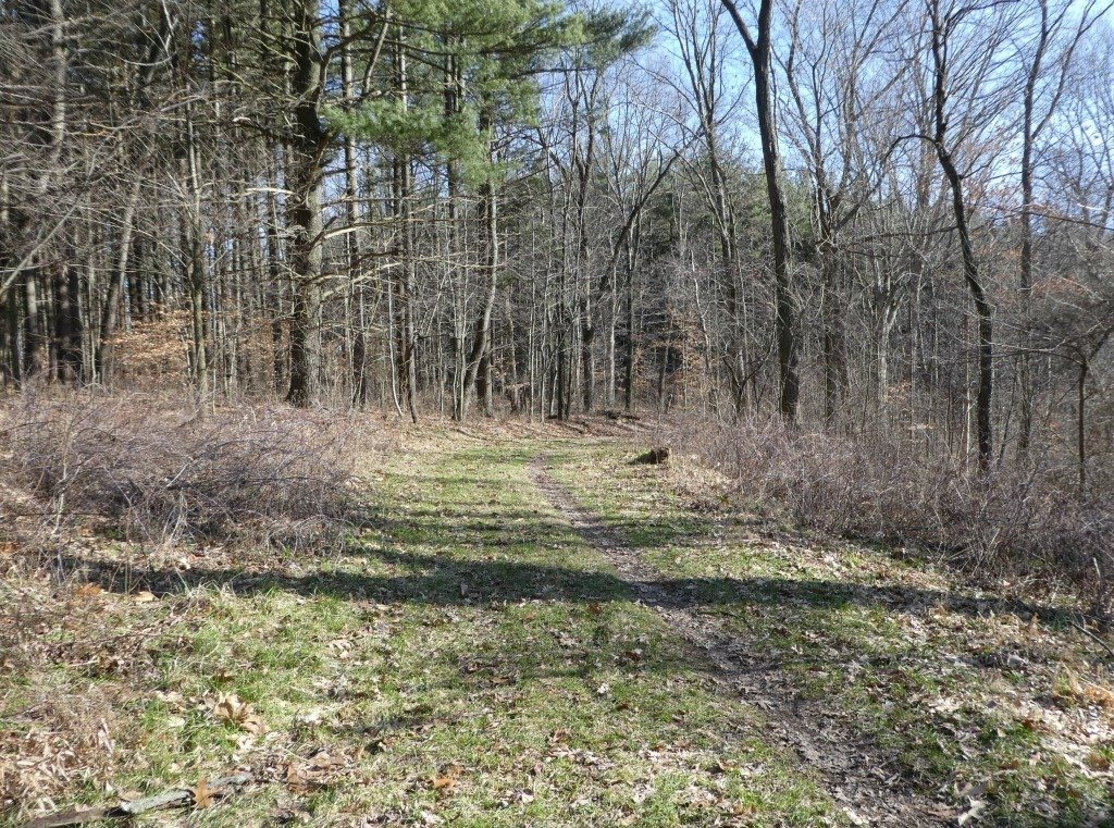 another stretch of the discovery forest trail